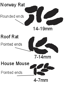 Rodent Droppings Advice On Identification Of Rodents