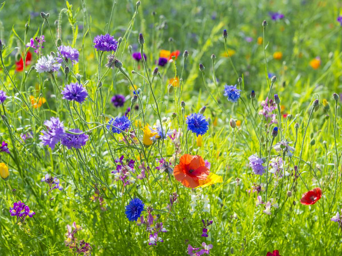 How to Protect and Promote Pollinators in Your Garden