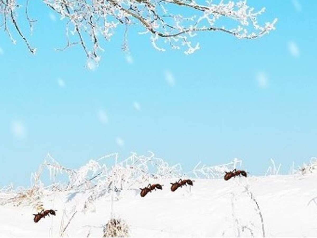 Ant Activity in Winter