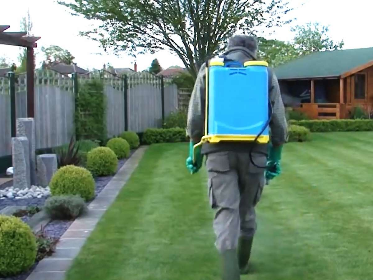 How to Get the Best Results from Lawn Weed Killers