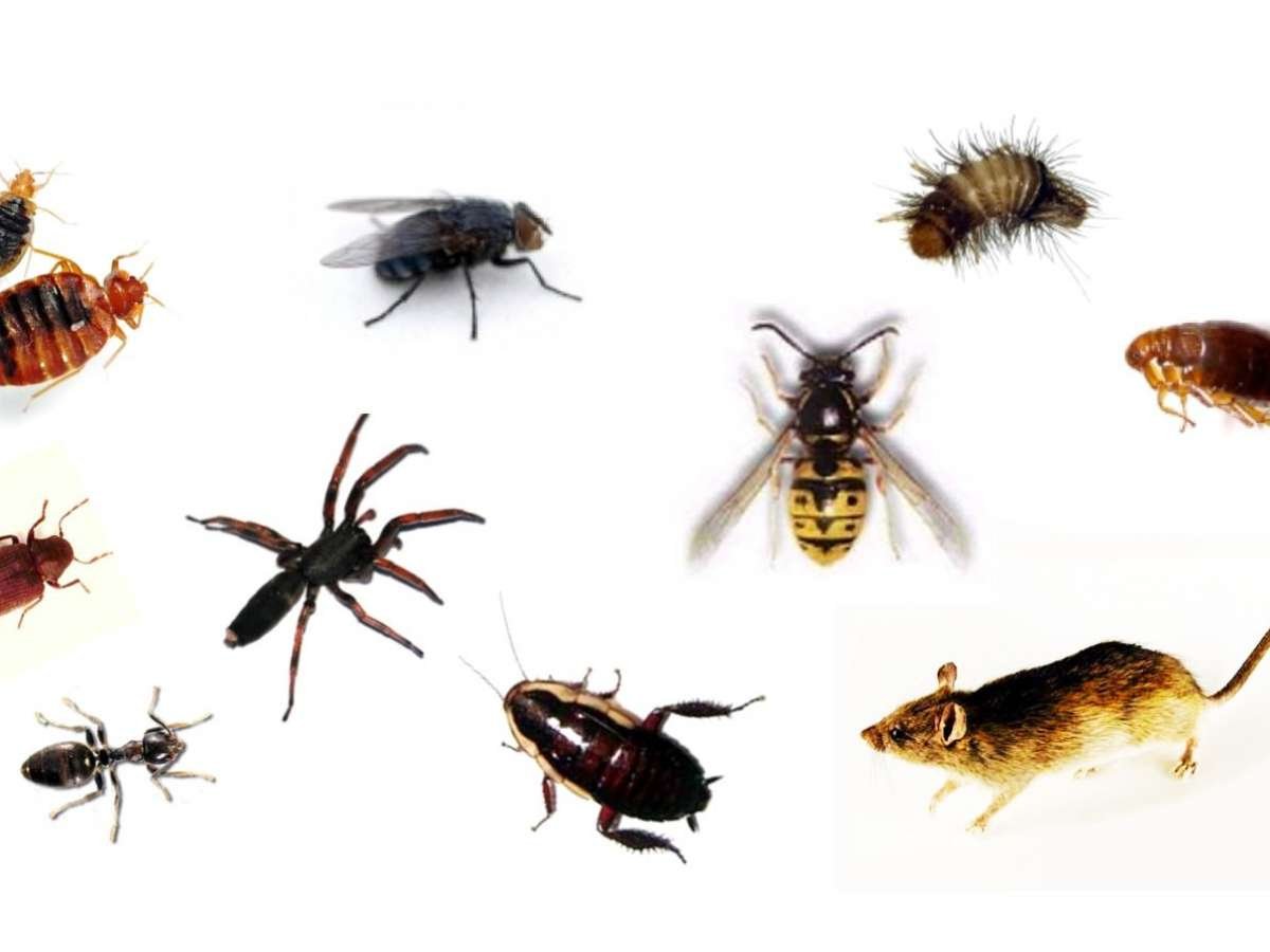 Top 10 Worst Home Pests