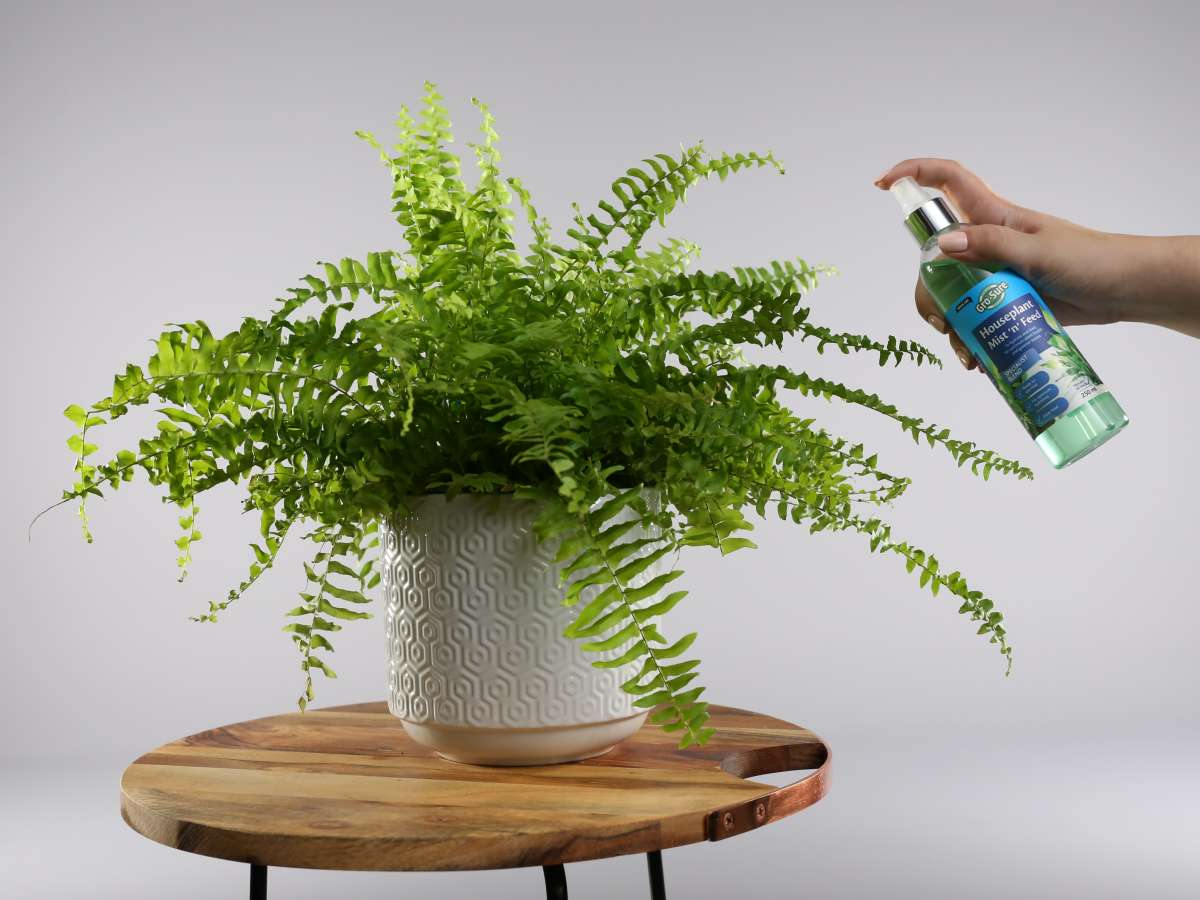 How to Make Your Indoor Houseplant Last
