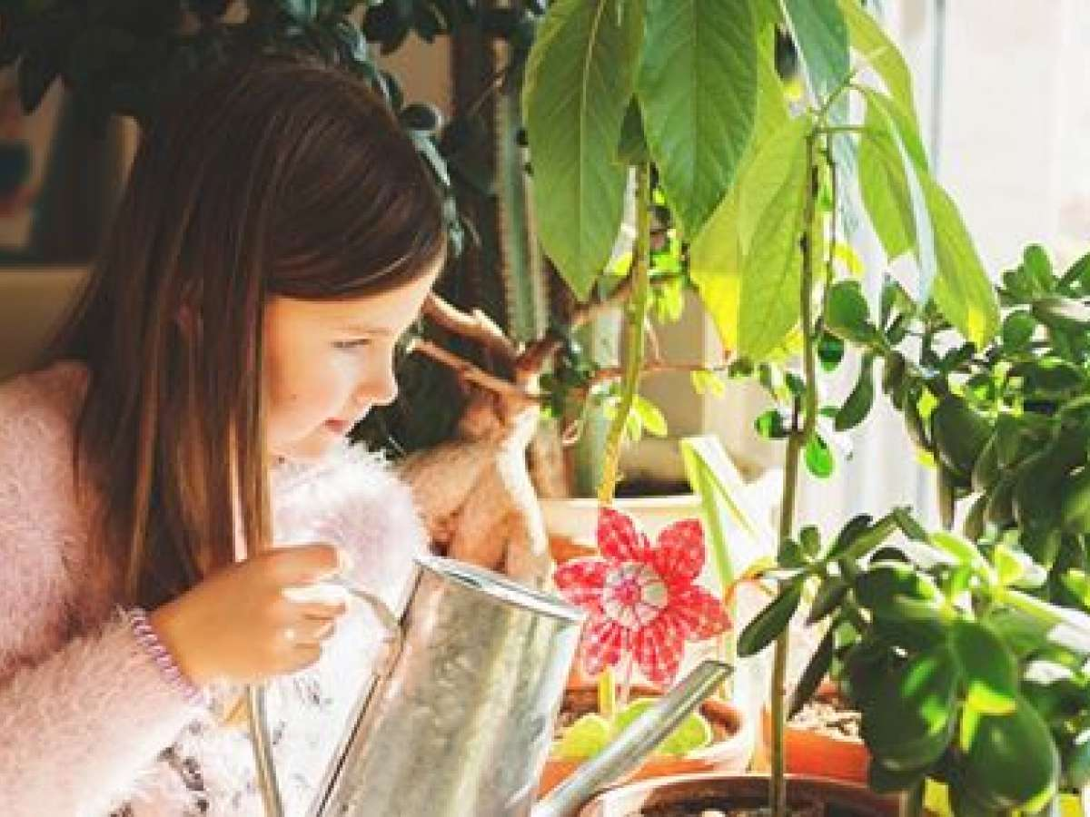 Is Winter Too Hot for Your Indoor Plants?