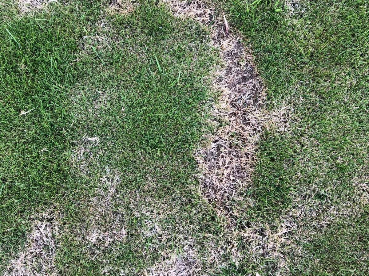 What are those Brown Patches on Your Lawn?