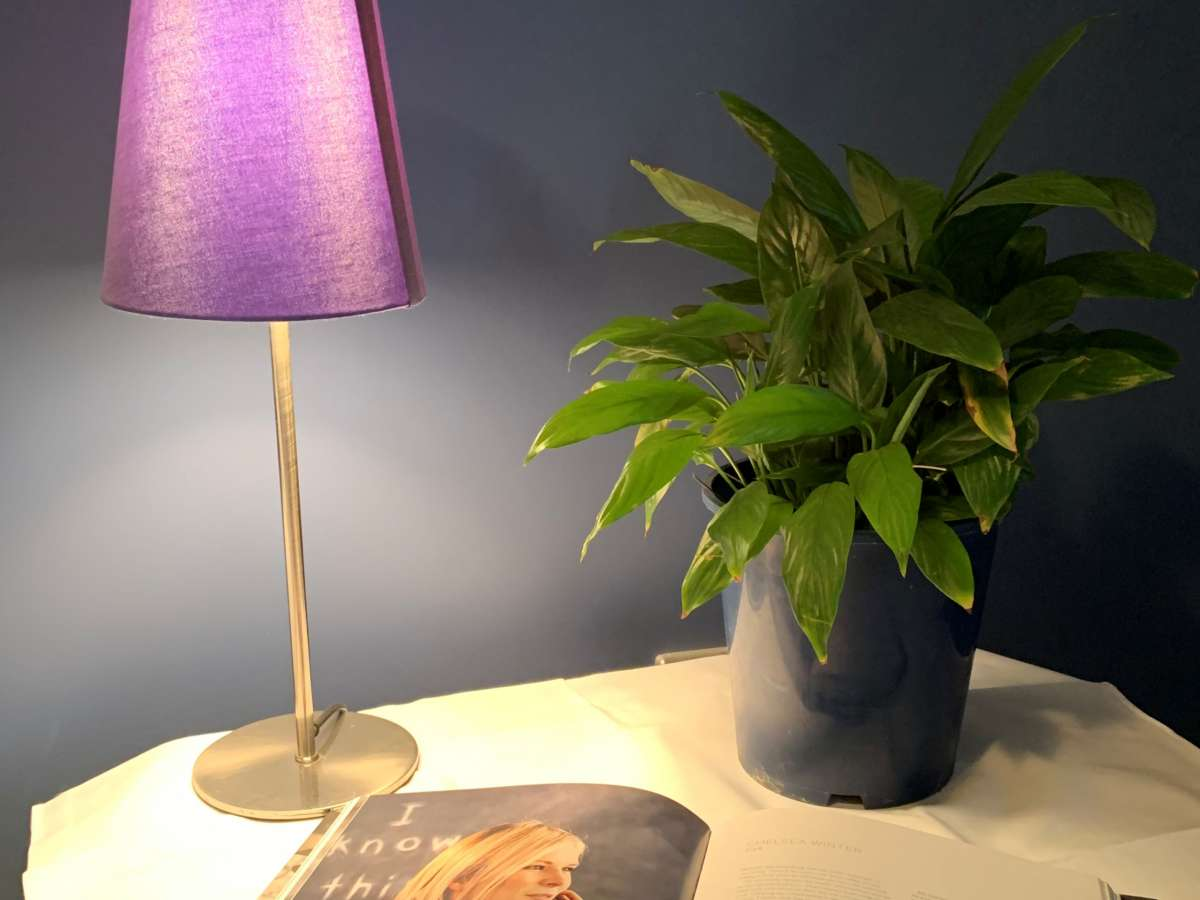 Shine a Little Light on Your Houseplants