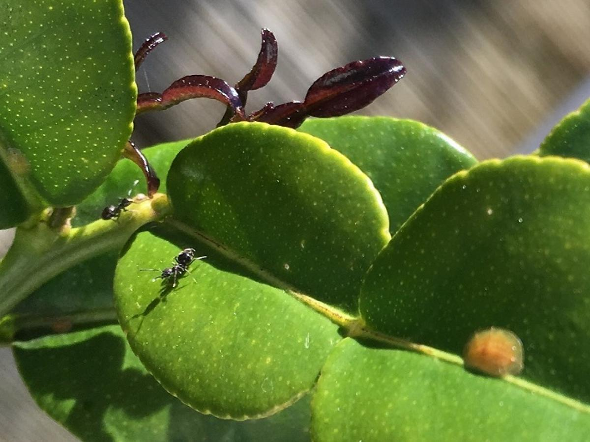 Ants in Your Plants?