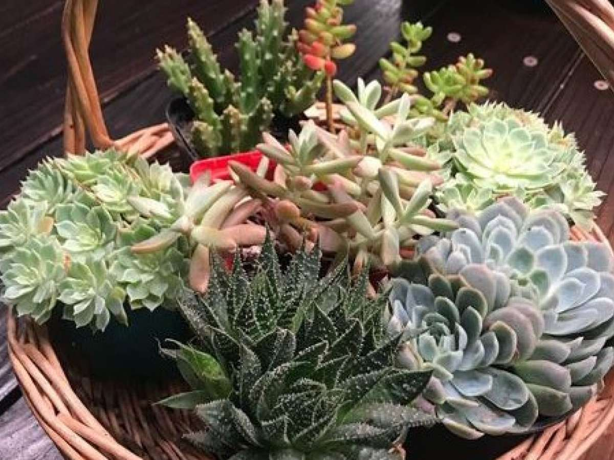 Growing Succulents and Cacti