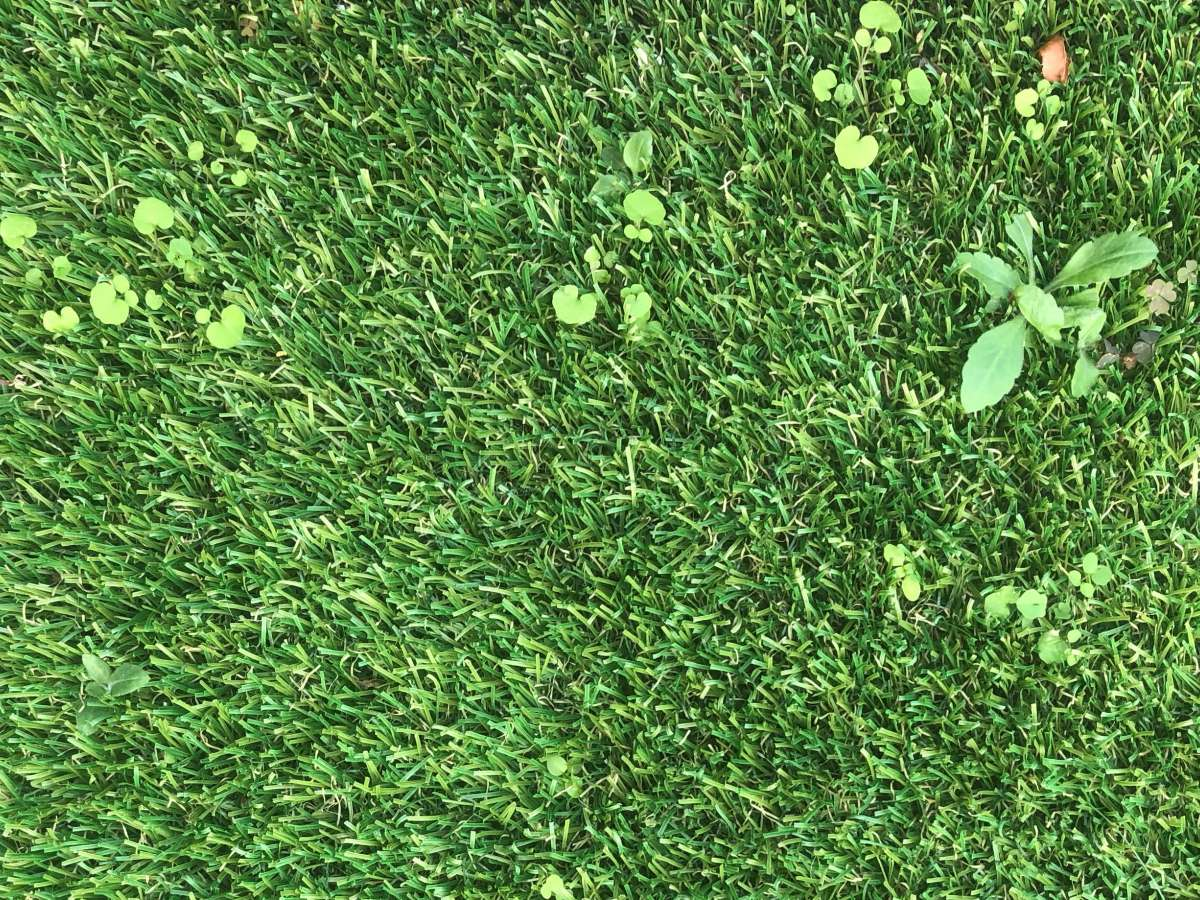 Get Rid of Weeds in Artificial lawn Turf
