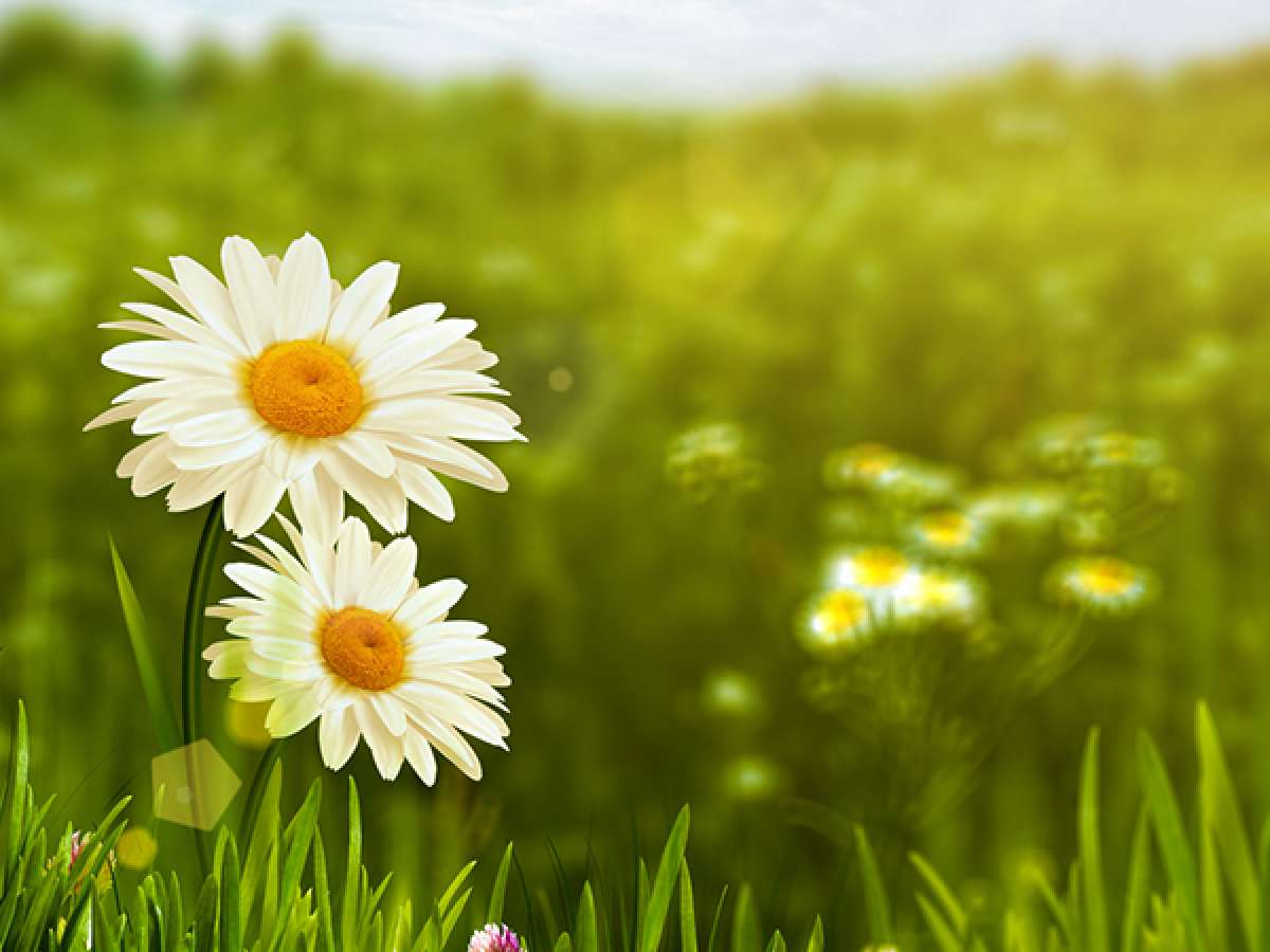 Pyrethrum, Pyrethrins, Pyrethroids - What's the Difference?