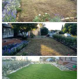 Rob Smart Lawn Seed Before and After