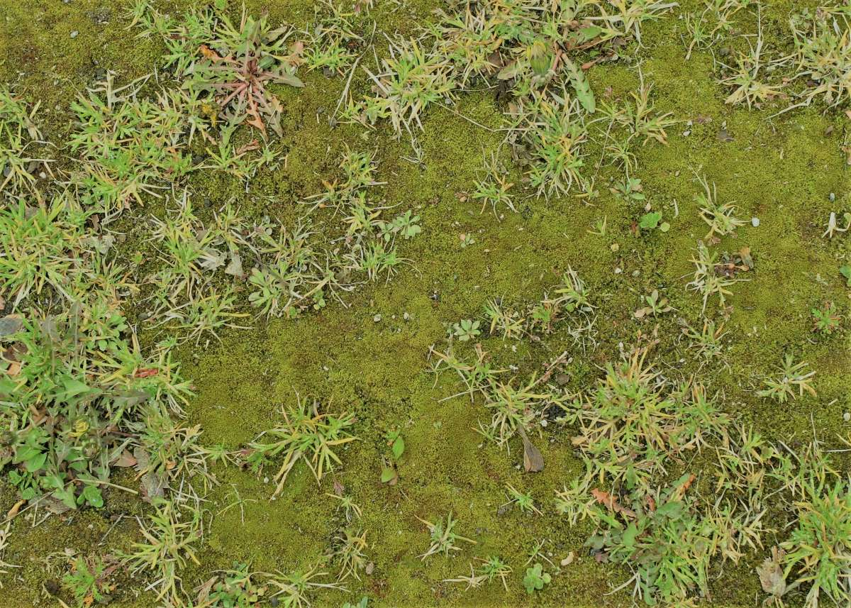 Moss Control Of Moss In Lawns And Gardens