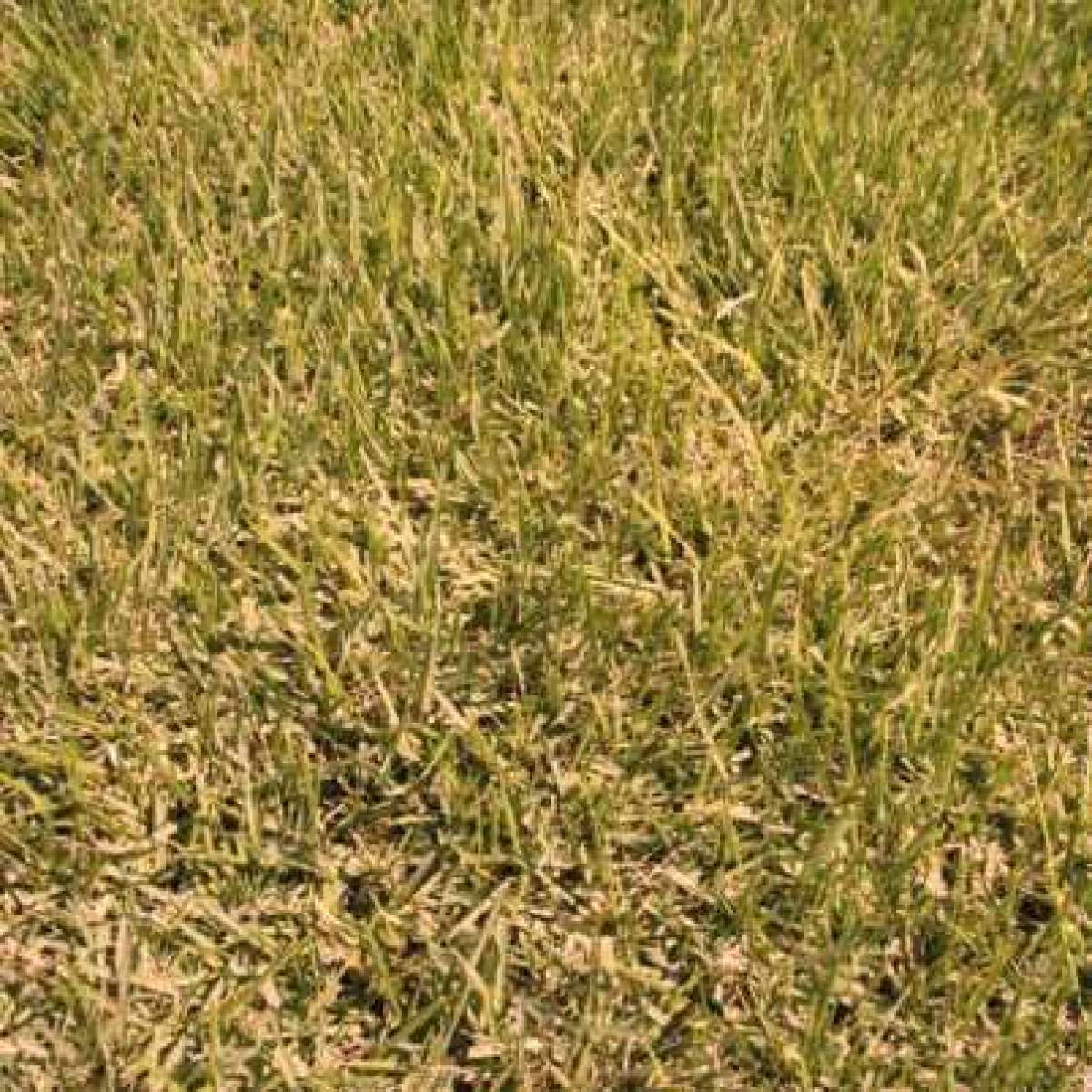 Alkaline Lawn Soils - Adjusting pH in Alkaline Lawns