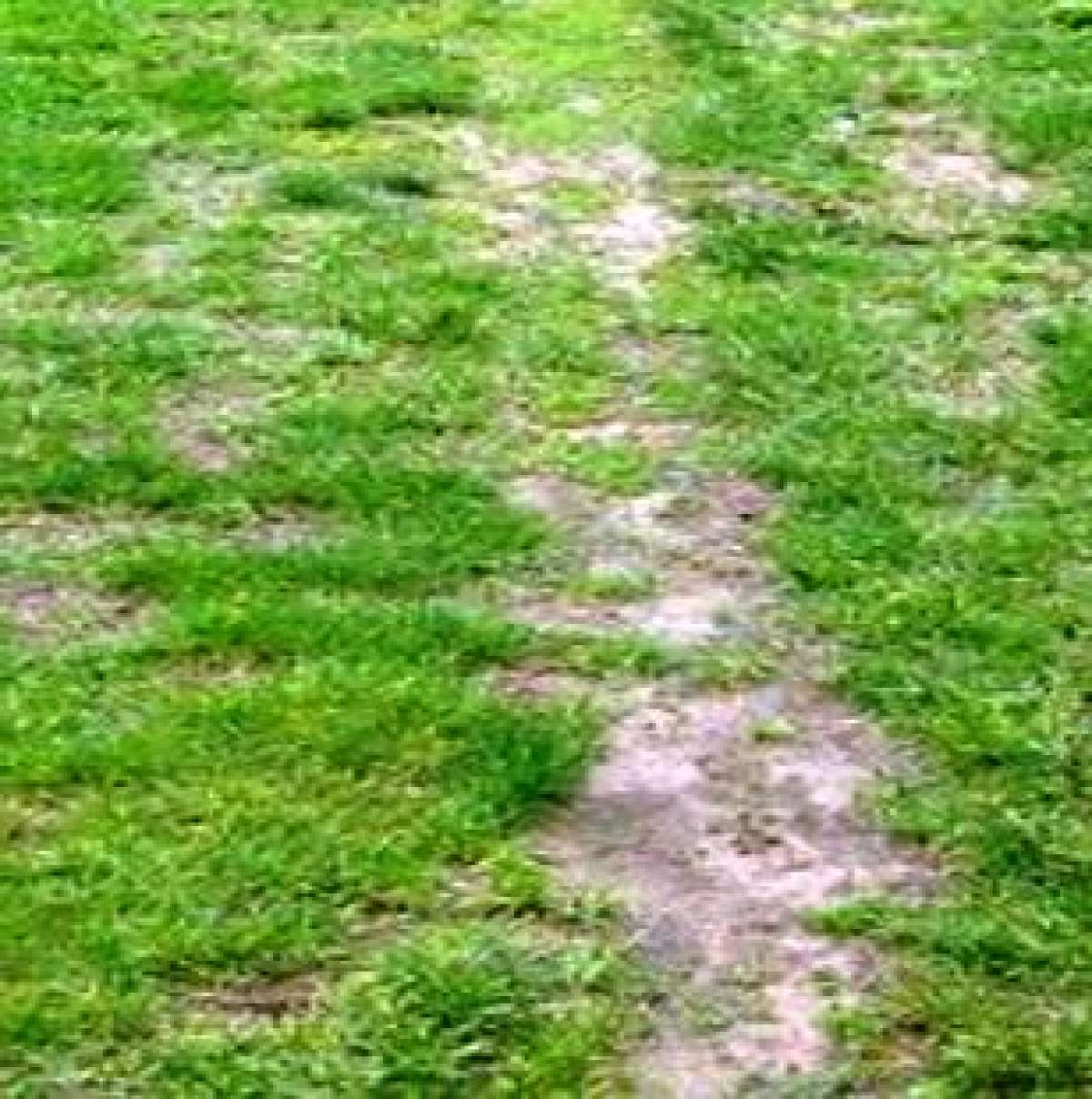 Remedy Lawn Soil Compaction