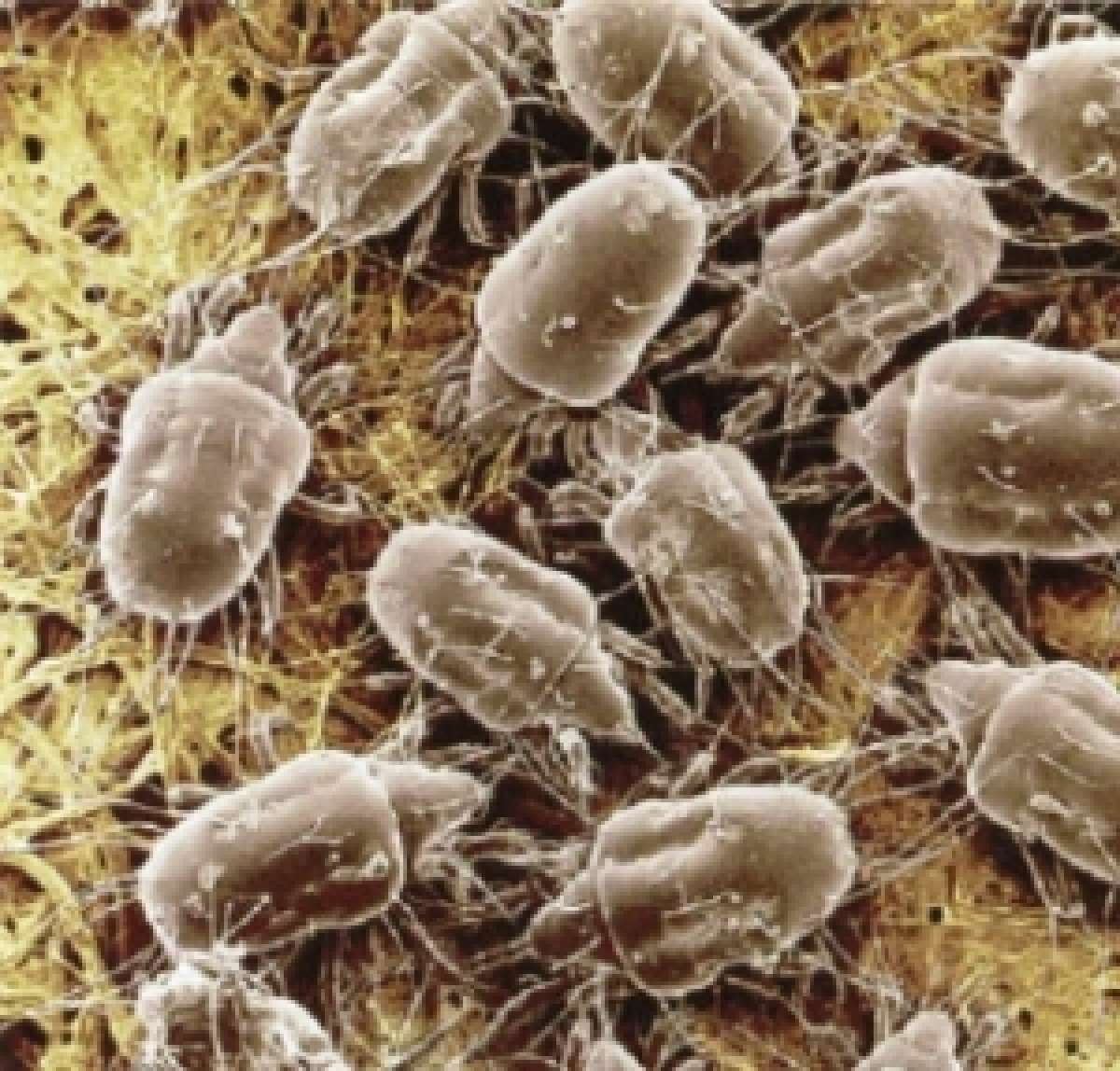 Dust Mites - Control of House Dust Mites