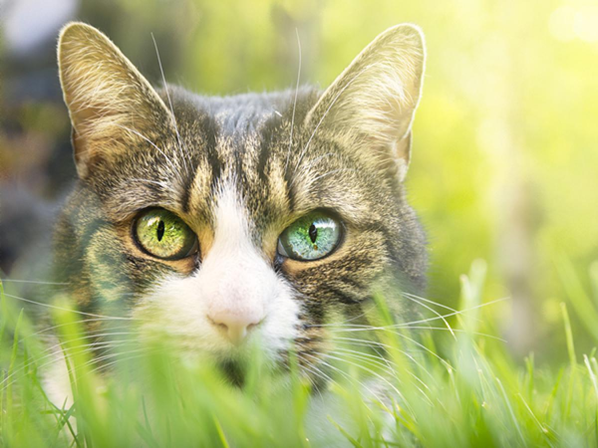 How to Deter Cats from Being a Nuisance in Your Garden