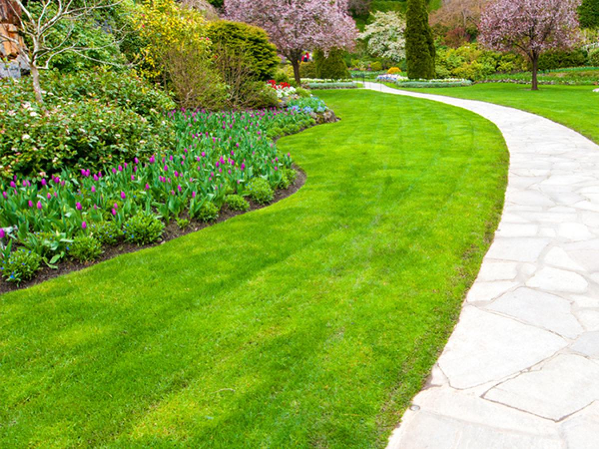 How to Thicken Your Lawn