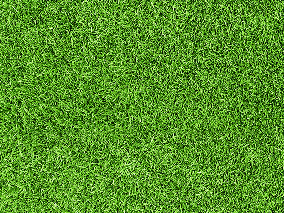 Your Lawn Care Guide - Download The Kiwicare Lawn Care Guide.