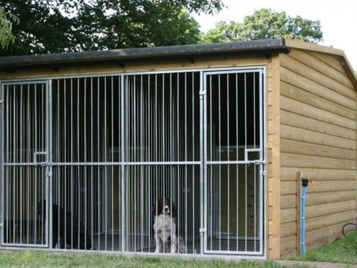 Cleaning Dog Kennels and Catteries with SORTED