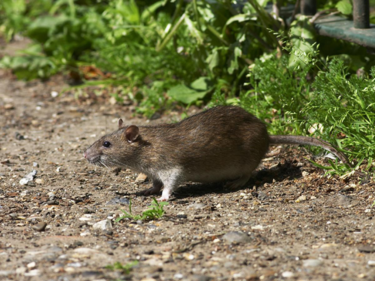 Fair Weather for Pests in Homes and Gardens
