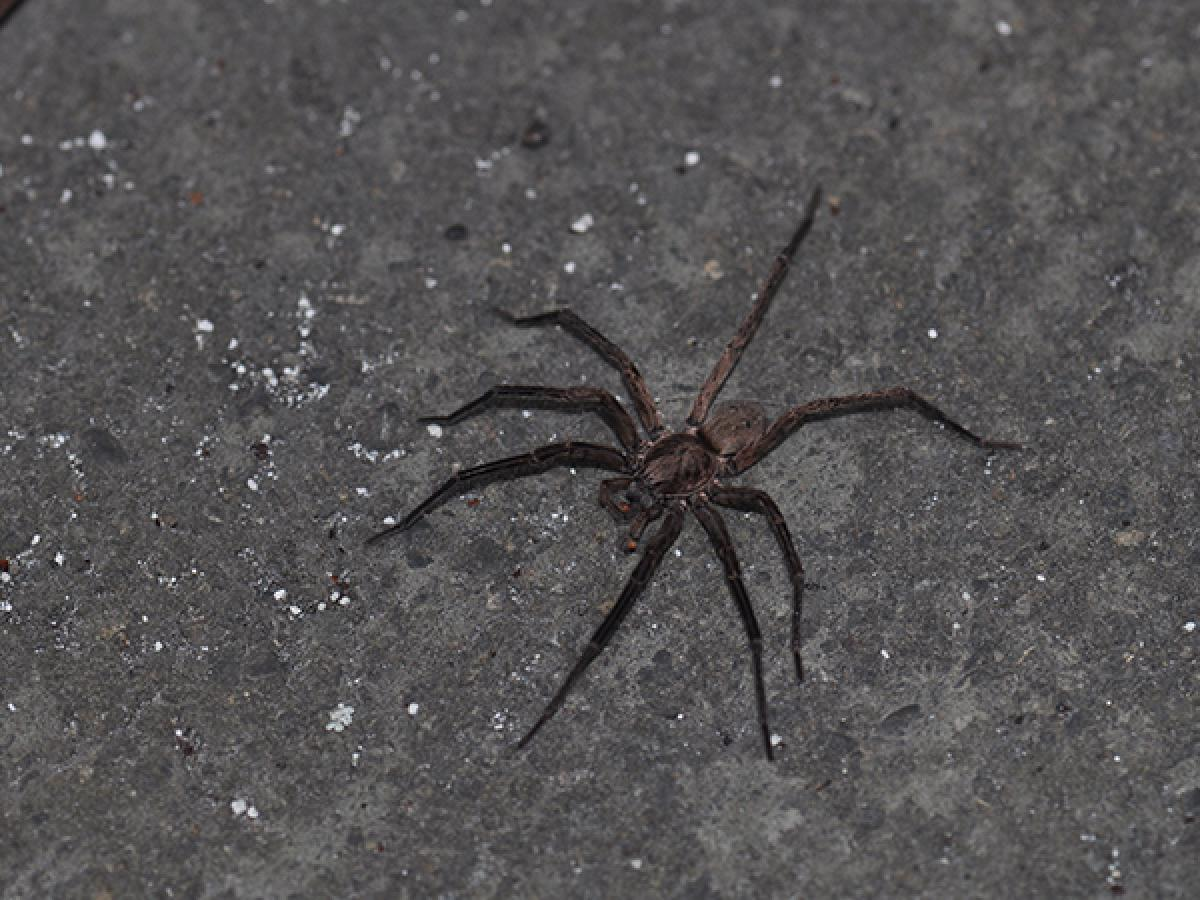 advice how to stop crawling insect and spider pests