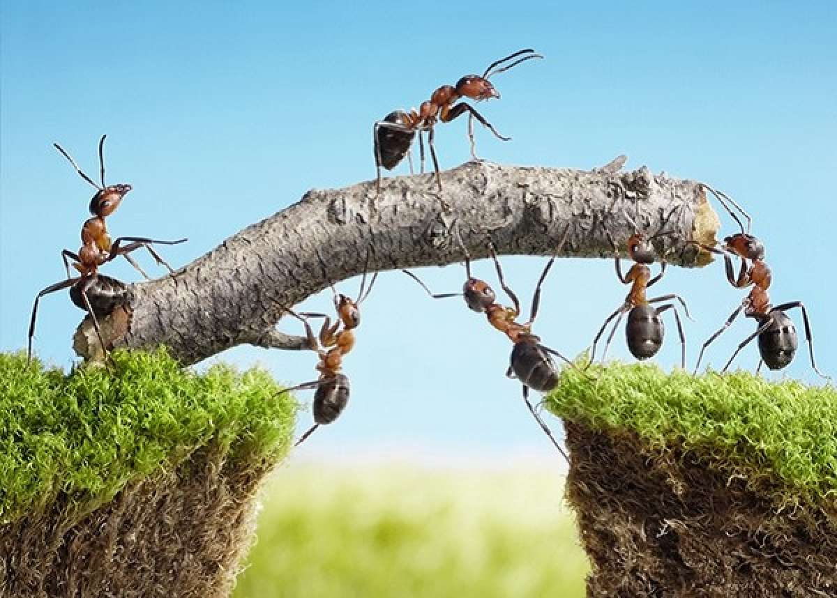 Advice Ants In Your Garden And How To Control Them