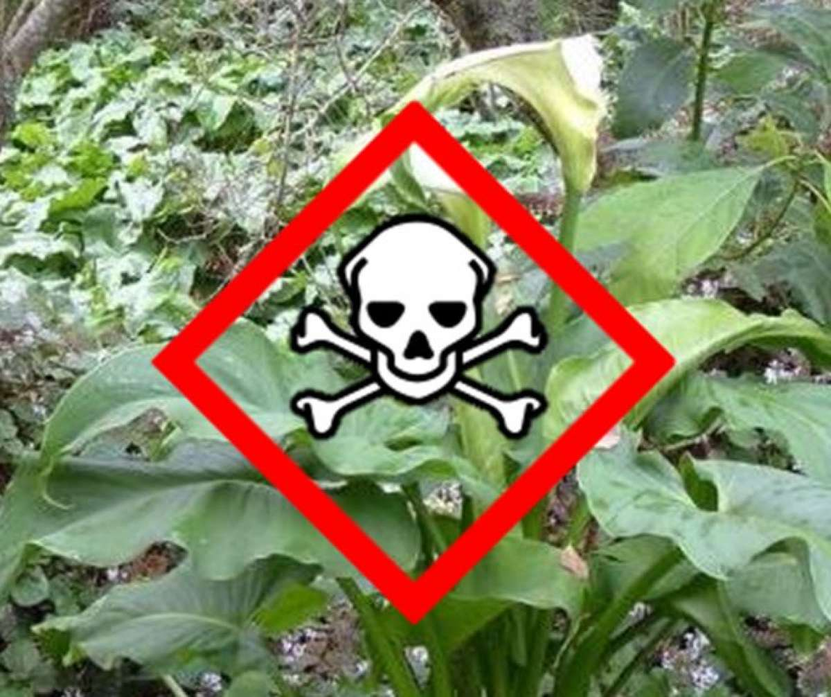 Garden Plants Poisonous To Dogs And Cats